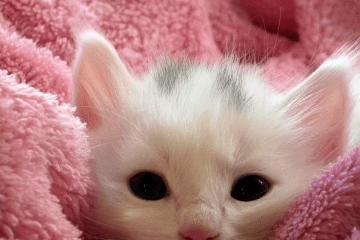 男猫咪霸气的名字
