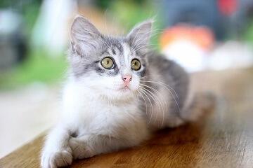 猫咪比较特别的名字