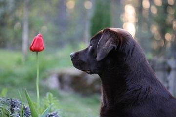 狗狗名字大全洋气可爱