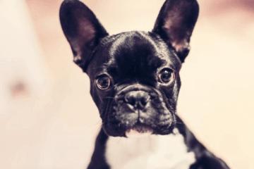 可爱顺口的小狗名字