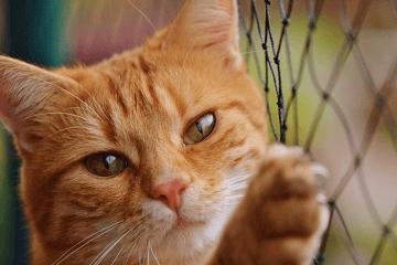橘猫名字大全洋气的