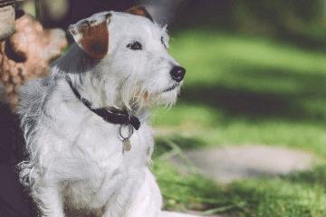 给狗狗取个幸运的名字