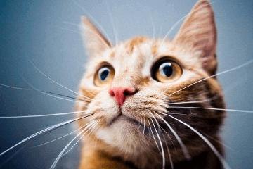 给猫猫取一个好养活的名字,接地
