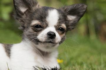 梦见狗是什么意思