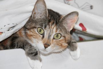有个性的猫咪名字大全