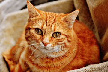 好听的猫名字萌