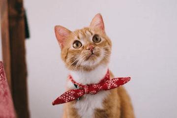 猫咪名字大全可爱好听