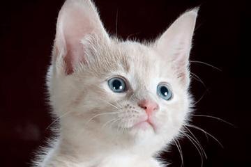代表好运的猫咪名字