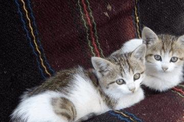 公猫起名带财运的名字