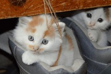 猫咪可爱名字大全公猫