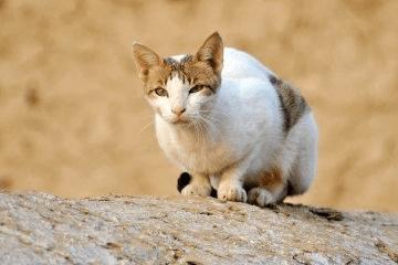 猫咪名字创意奇葩