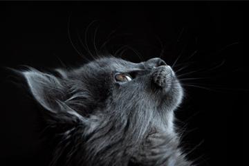 猫咪很萌的名字