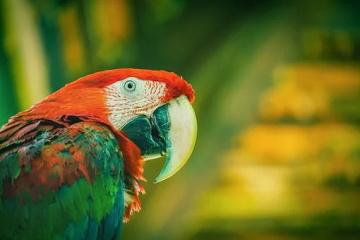宠物鸟名字可爱洋气