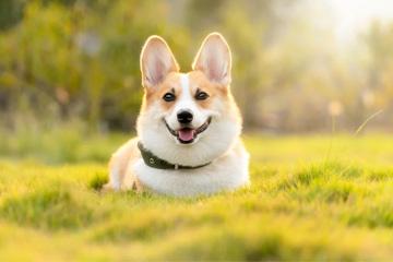 又萌又可爱的狗狗名字