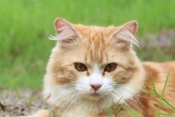 小猫的名字萌又洋气的大全