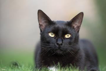 黑猫取什么名字最好听