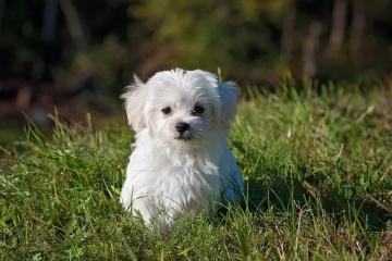 最洋气的狗名招财旺家