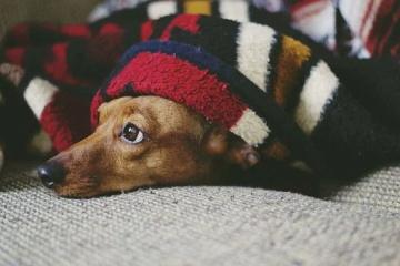 狗狗名字女孩可爱