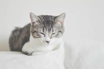 猫咪英文名有寓意的