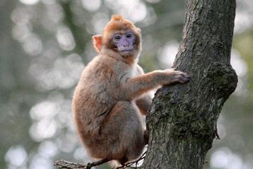属猴的几月出生好