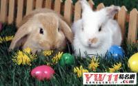 属兔的名人有哪些