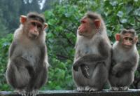 男属猴找什么属相最好