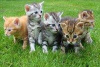 给小猫咪取名字大全